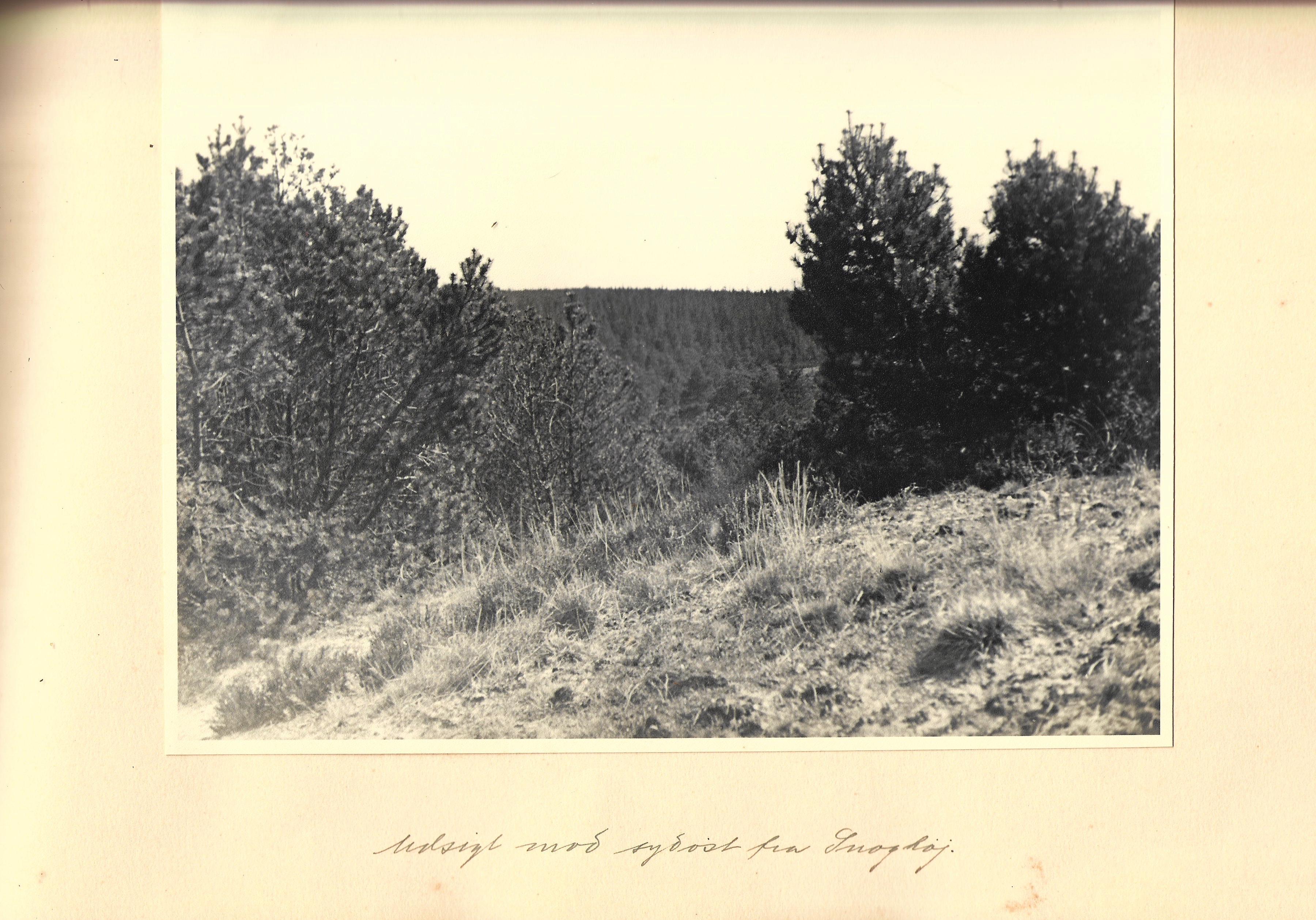 hovborgplantage_bog-0014