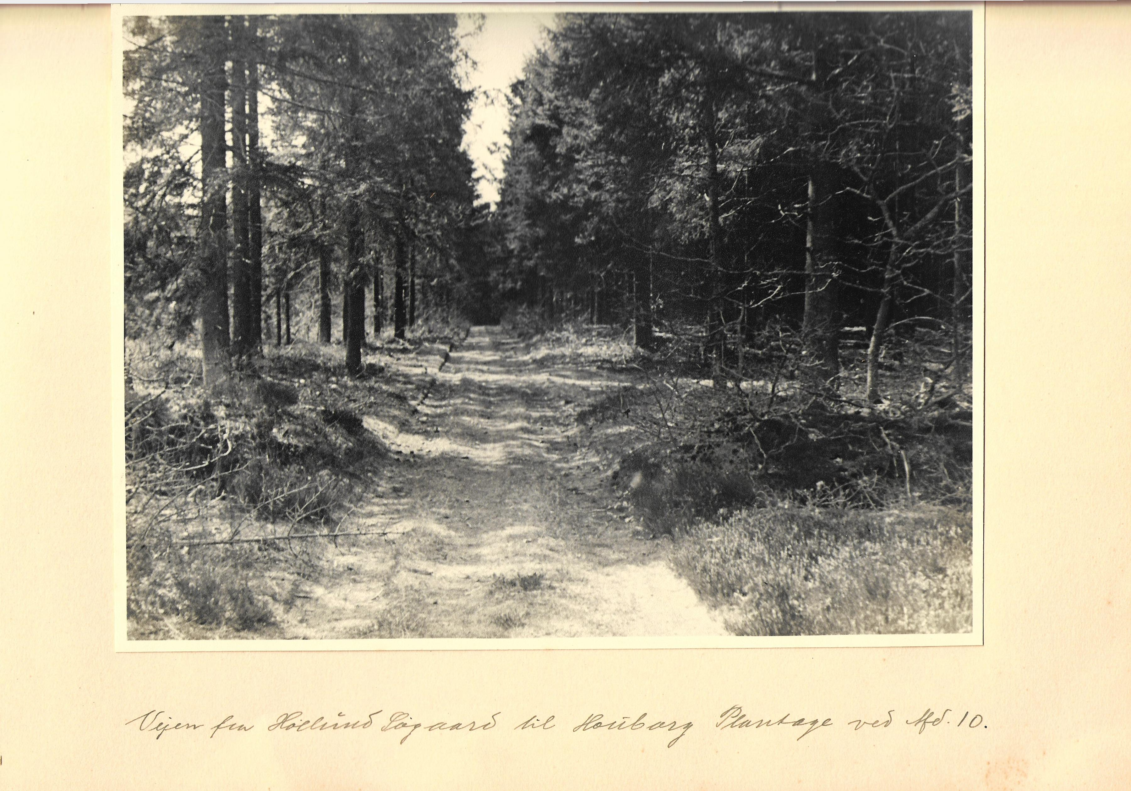 hovborgplantage_bog-0019
