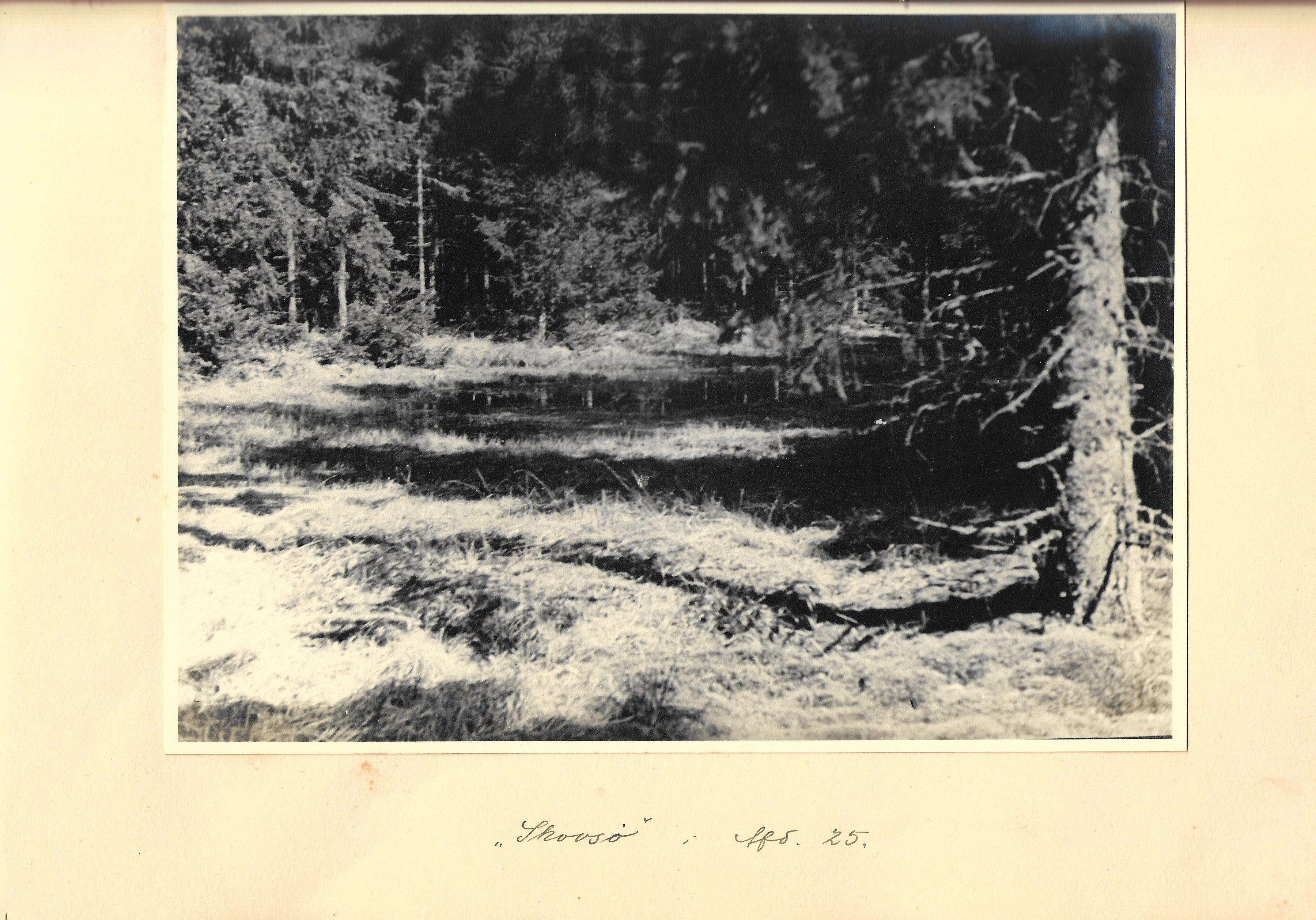 hovborgplantage_bog-0024