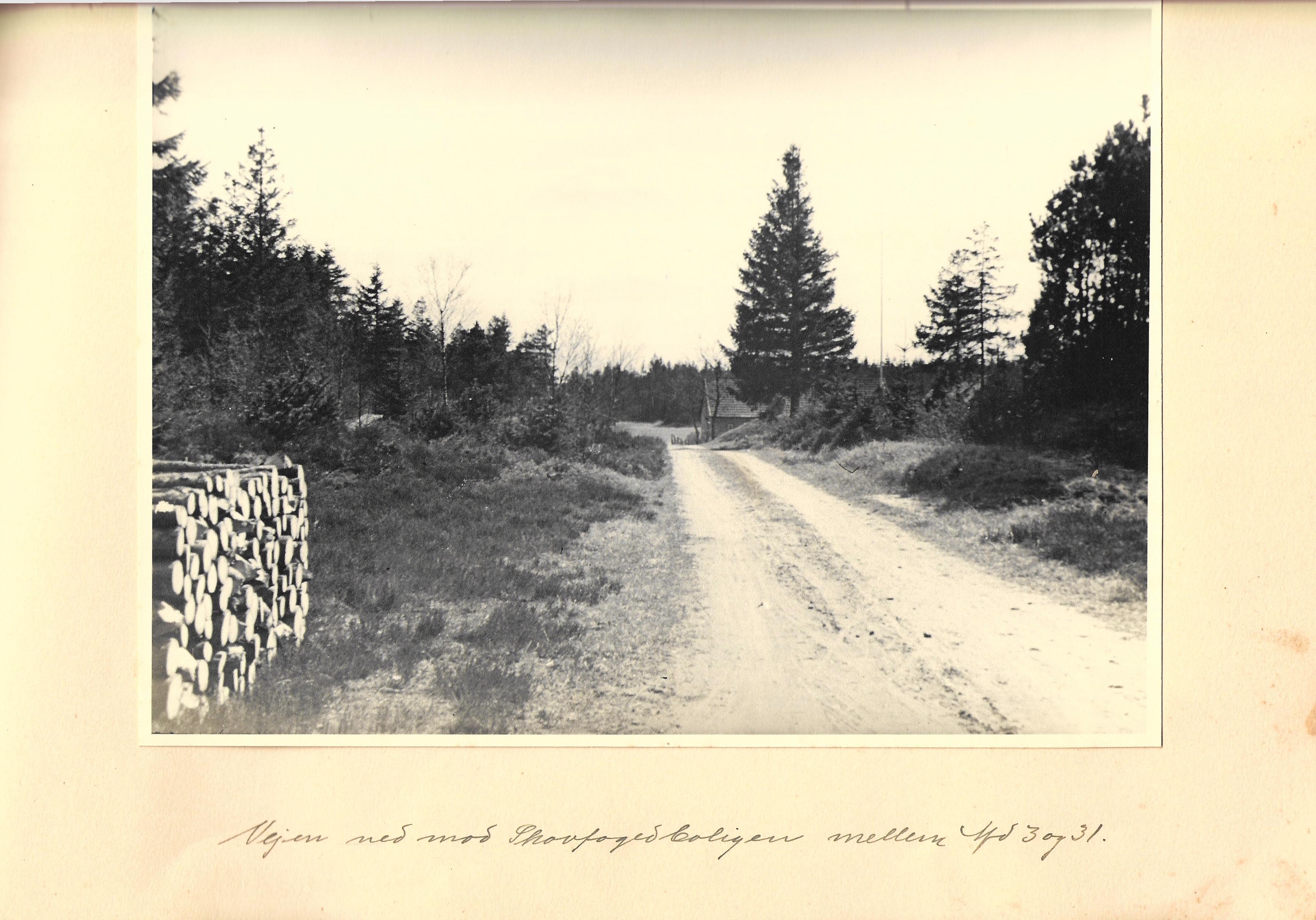 hovborgplantage_bog-0027