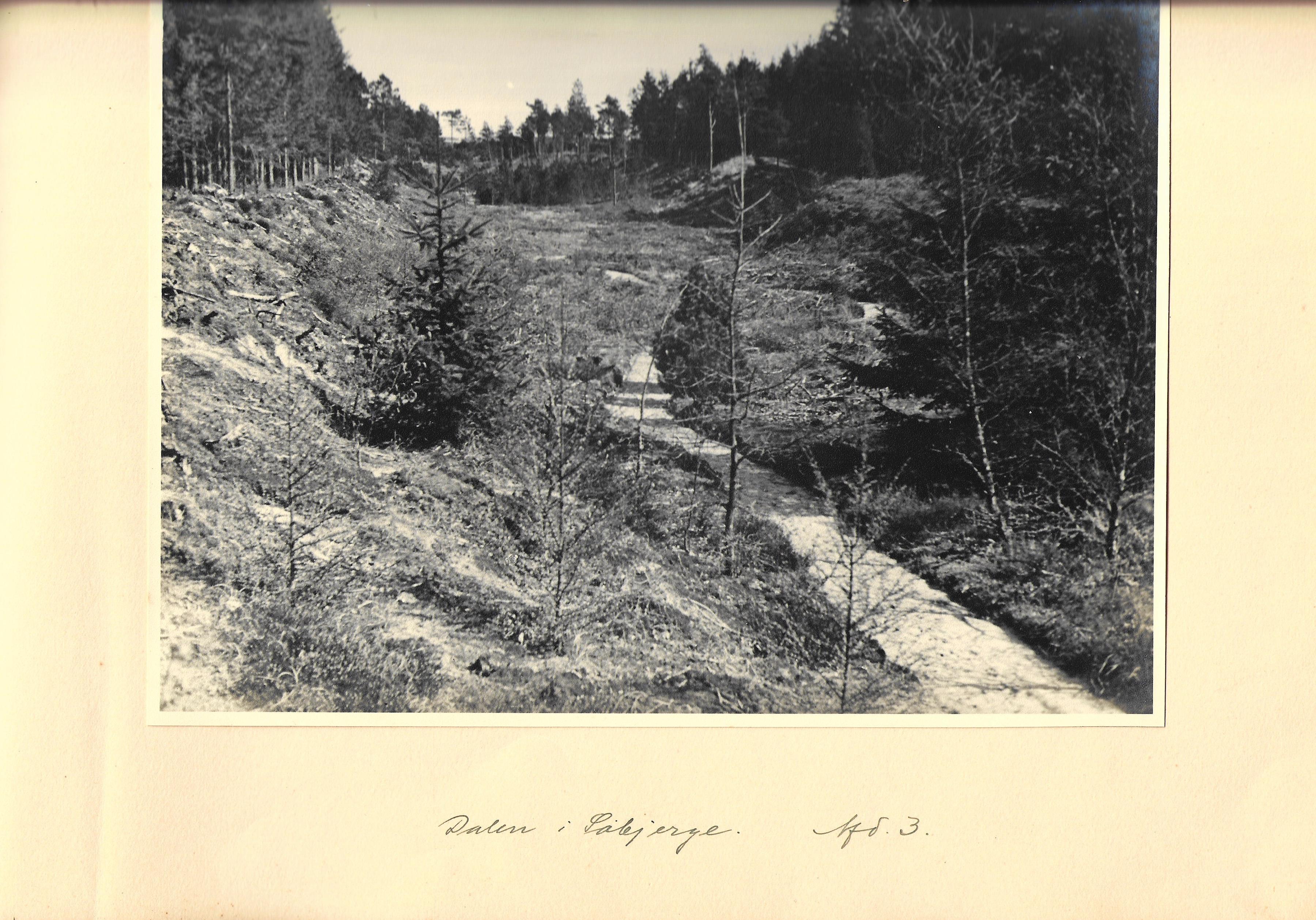 hovborgplantage_bog-0028