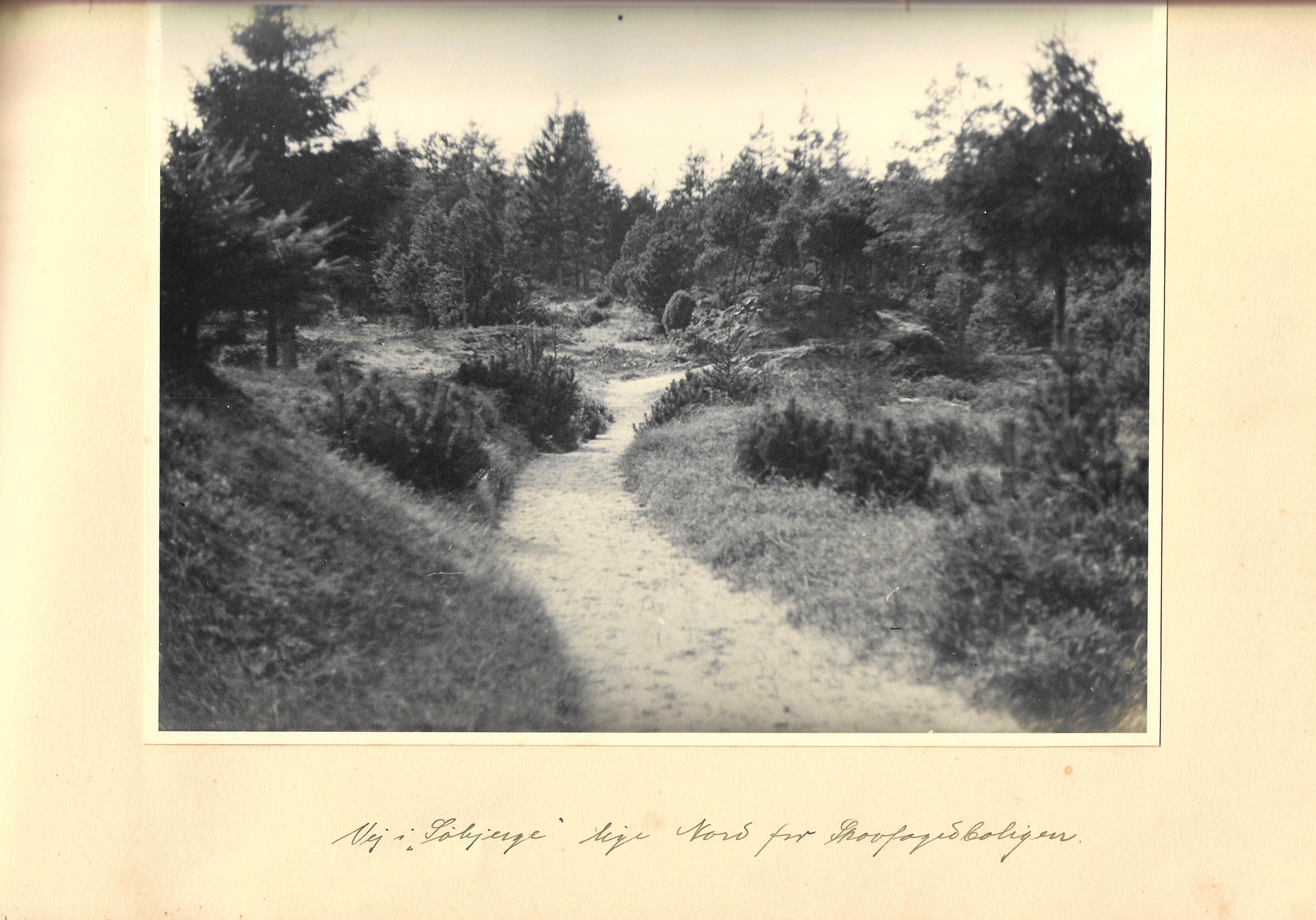 hovborgplantage_bog-0029