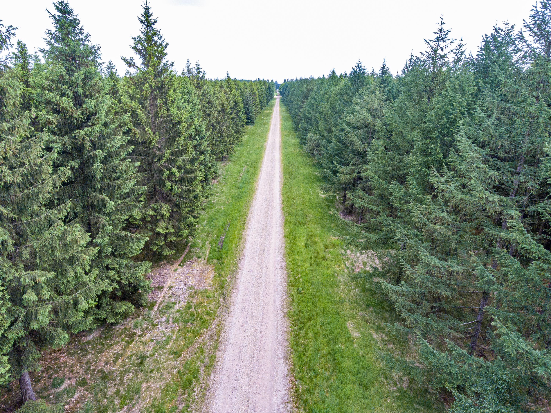 2021-juni-11-Hovborg-plantage-dronefoto-19