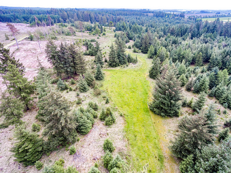 2021-juni-11-Hovborg-plantage-dronefoto-38-Edit