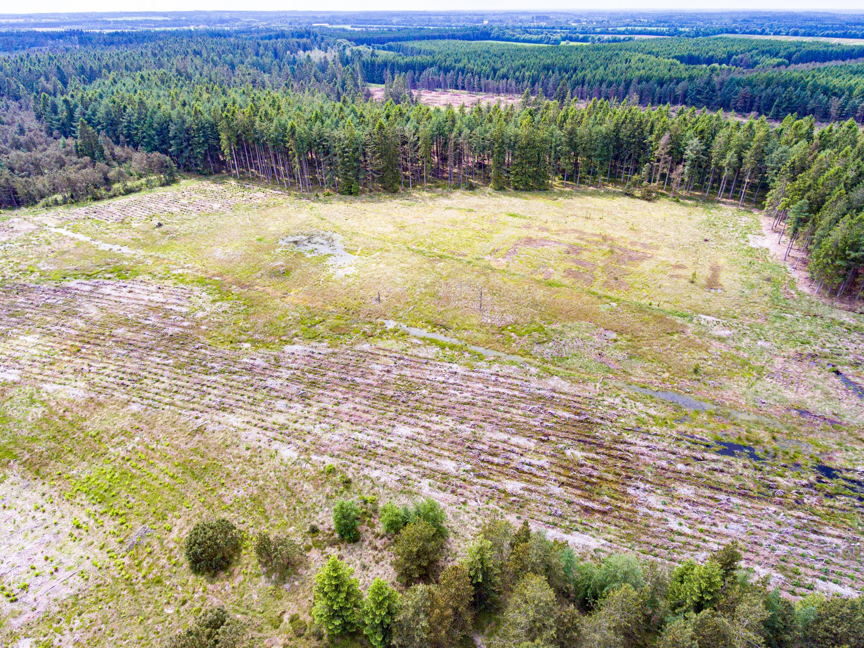 2021-juni-11-Hovborg-plantage-dronefoto-51