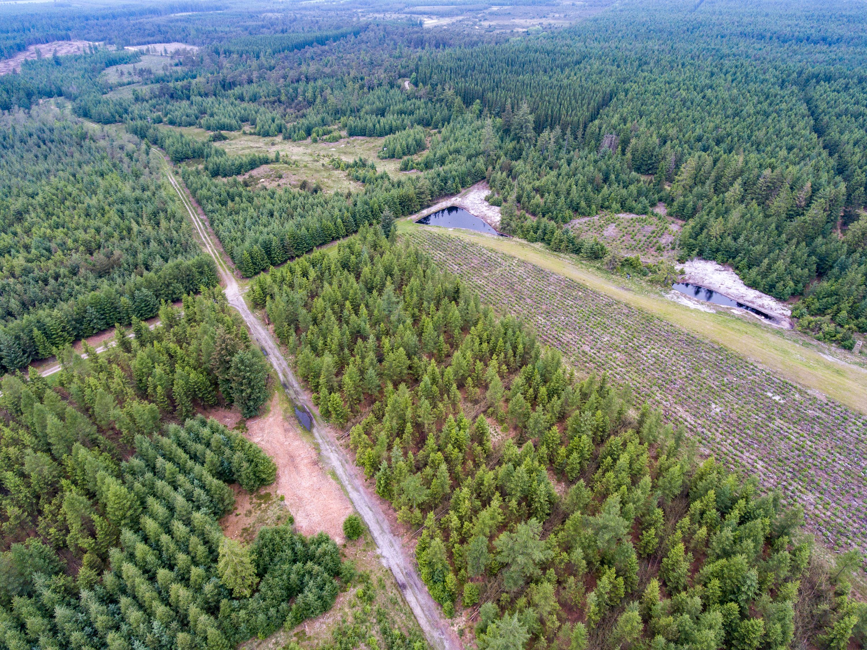 2021-juni-11-Hovborg-plantage-dronefoto-73
