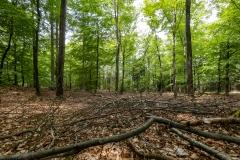 Skoven 2021